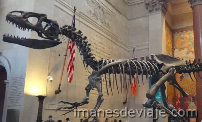 Escenario películas_Nueva York_Museo Historia Natural