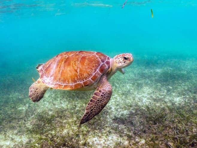 que ver en Riviera Maya mejores excursiones
