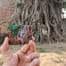Qué ver en Ayutthaya en un día desde Bangkok