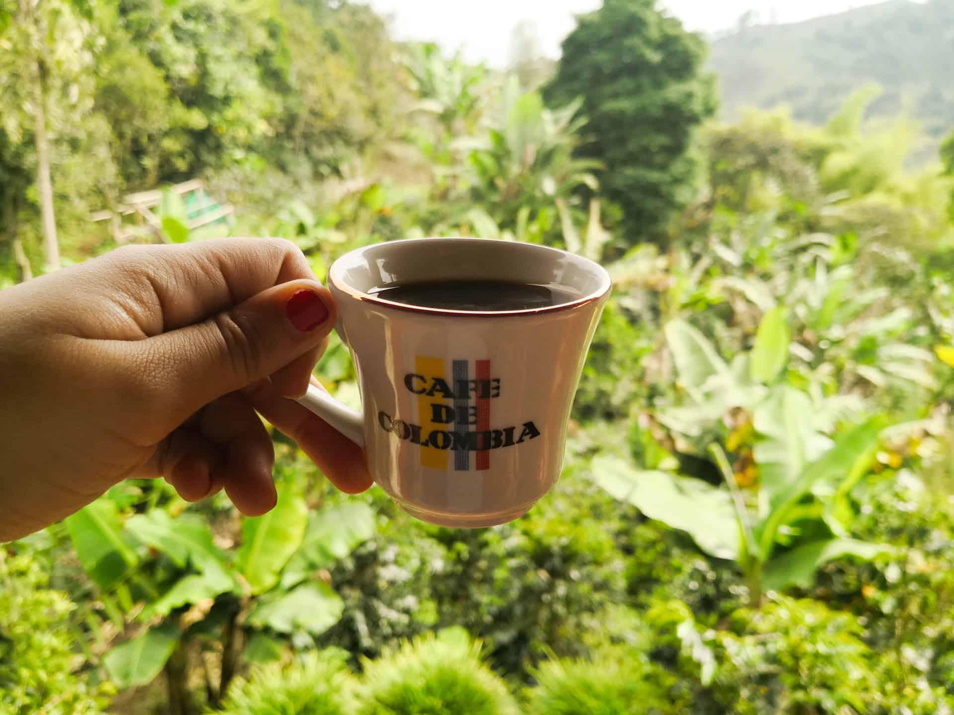que ver en el eje cafetero colombia salento valle del cocora