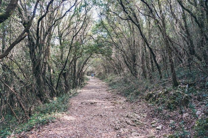 ruta por el monte buciero